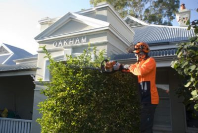 Hedging project in Burwood