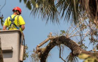 A Tree Removal Project in Sydney