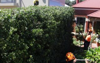 All the boys on a hedging project in Cronulla