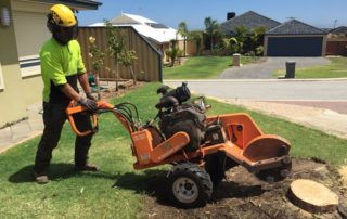 Ben performing a stump removal in the Sutherland Shire