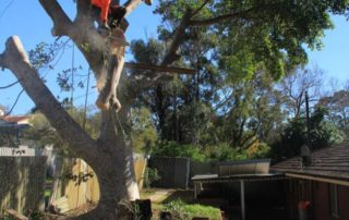 Ross performing a tree removal in Rockdale