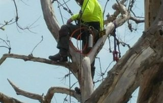 Tree cutting at height at a project in Miranda