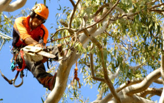 Tree lopping in sutherland shire by Benny